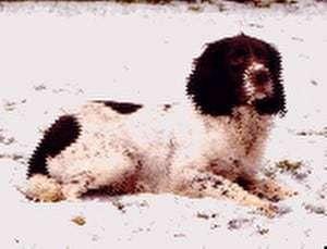 SFTCH 2001 Flowbog Yank of Brackendale